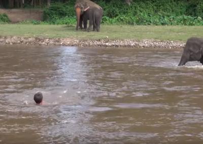 Un elefante se lanza a un río y rescata a su cuidador